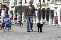 Ein junger Flat Coated Retriever geht an lockerer Leine durch die Stadt.