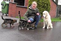 Ein Golden Retriever sitzt ruhig neben zwei fressenden Katzen.