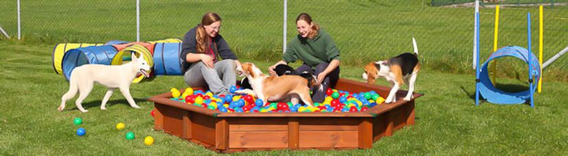 Welpen spielen im Bällebad unter der Aufsicht unserer Hundetrainer.