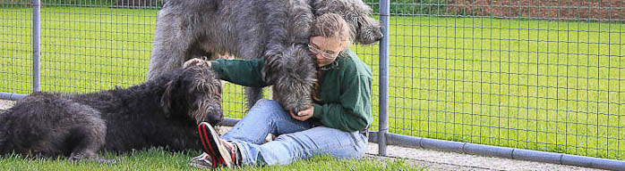 Eine Tierpflegerin sitzt auf dem Boden und schmust mit drei Irischen Wolfshunden.