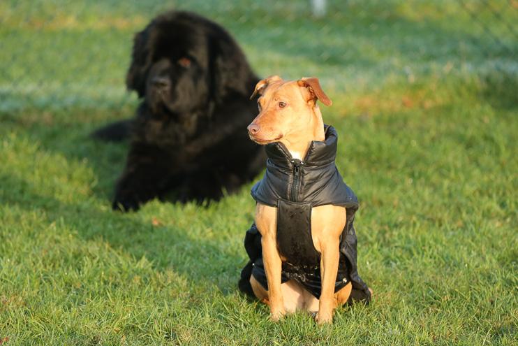 im eine Brauchen Mantel Hunde Winter Jacke bzweinen TlKJ1Fc3
